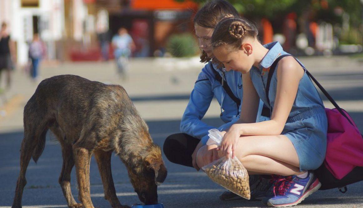 Two children feeding a homeless dog.