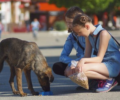 Two children feeding a homeless dog.