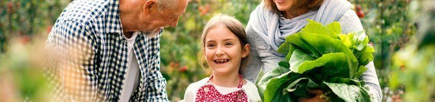 retirement activity gardening