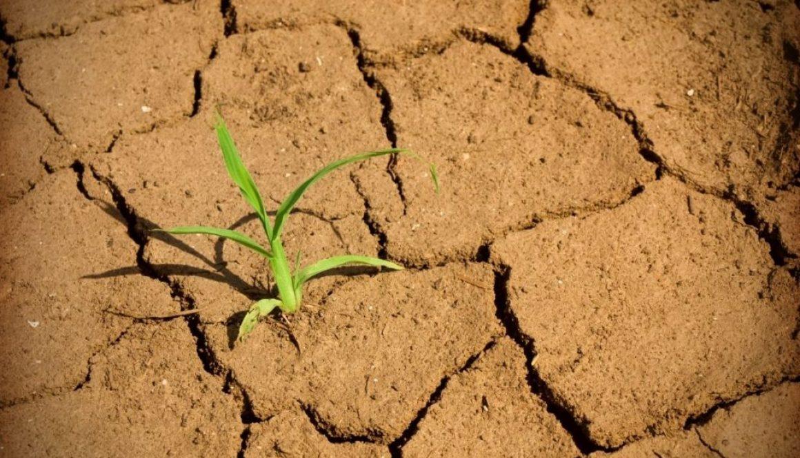 A bit of grass survives in a desert.